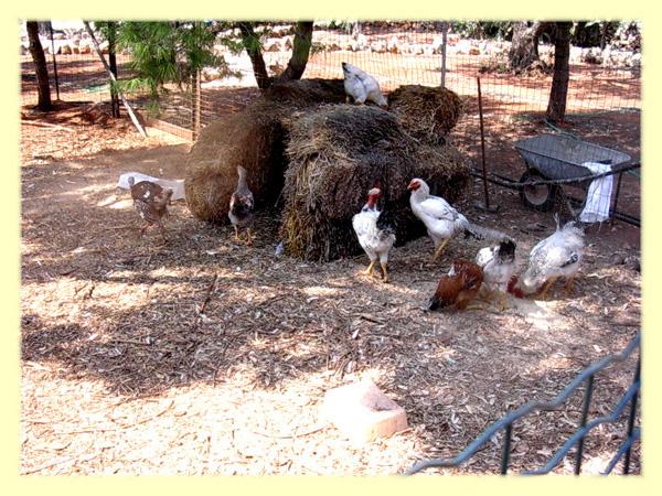 recinto con animali